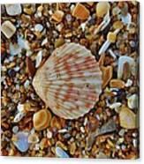 Single Shell Hatteras Island 17 9/3 Canvas Print