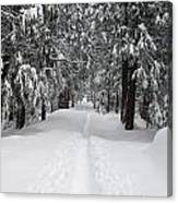 Single Track Cross Country Skiing Trail Yosemite National Park Canvas Print