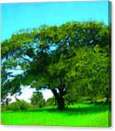 Single Tree In Spring Canvas Print