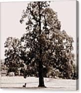 Single Tree Journey Canvas Print