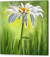 Single White Daisy  Canvas Print