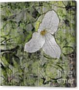 Single White Trillium Canvas Print
