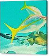 Singray City Cayman Islands Three Canvas Print