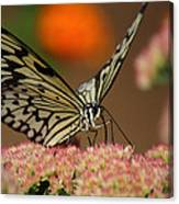 Sip Of The Nectar Canvas Print