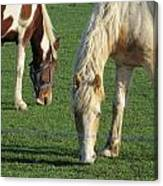 Sister Horses Canvas Print