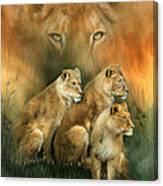 Sisterhood Of The Lions Canvas Print