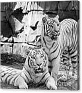 Sisters Black And White Canvas Print