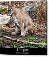 sitting Cougar Canvas Print
