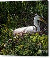 Sitting On The Nest Canvas Print