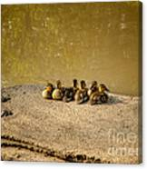Six Ducklings In A Row Canvas Print