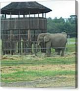 Six Flags Great Adventure - Animal Park - 121221 Canvas Print