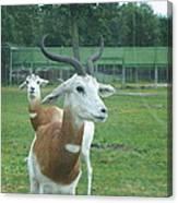Six Flags Great Adventure - Animal Park - 121250 Canvas Print