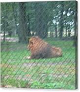 Six Flags Great Adventure - Animal Park - 121252 Canvas Print