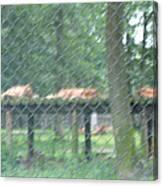 Six Flags Great Adventure - Animal Park - 121254 Canvas Print