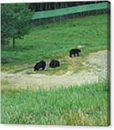 Six Flags Great Adventure - Animal Park - 121255 Canvas Print