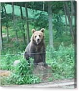 Six Flags Great Adventure - Animal Park - 121263 Canvas Print