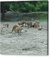 Six Flags Great Adventure - Animal Park - 121270 Canvas Print