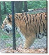 Six Flags Great Adventure - Animal Park - 121278 Canvas Print