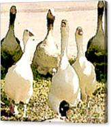 Six Geese And A Duck Canvas Print