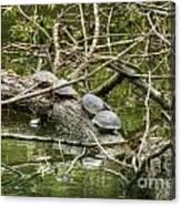 Six Turtle On A Log Canvas Print