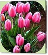 Skagit Valley Tulips 9 Canvas Print