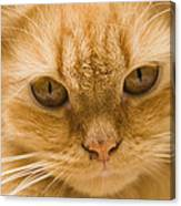 Skc 1483 Unconcerned Stare Canvas Print