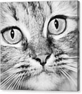 Skc 1498 Wide Eyed Canvas Print