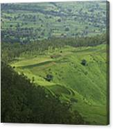 Skc 3566 The Gamut Of Green Canvas Print
