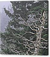 Skeletal Treescape Canvas Print
