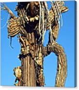 Skeleton Of A Saguaro Tree Canvas Print