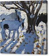 Skewbald Ponies In Winter Canvas Print