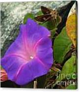 Skipper And The Flower Canvas Print