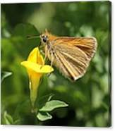 European Skipper On Bird's-foot Trefoil Canvas Print