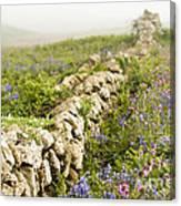 Skomer Wildflowers Canvas Print