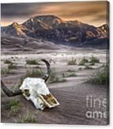 Skull In The Desert Canvas Print