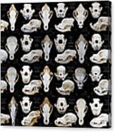 Skulls Of Various Dog Breeds Canvas Print