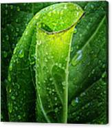 Skunk Cabbage Canvas Print