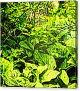 Skunk Cabbage Thicket Canvas Print