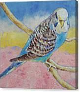 Sky Blue Budgie Canvas Print