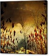 Autumn Lights Sky Colors  Canvas Print