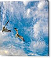 Sky Dance Canvas Print