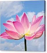 Sky Lotus Canvas Print