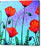 Sky Poppies Canvas Print