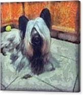 Skye Terrier Canvas Print