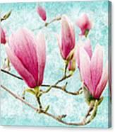 Skyward Magnolia Painterly 4 Canvas Print