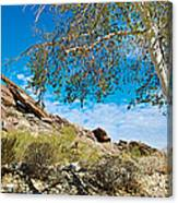 Slanted Rocks And Sycamore Tree  In Andreas Canyon In Indian Canyons-ca Canvas Print