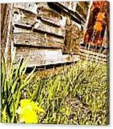 Slash Of Spring Canvas Print
