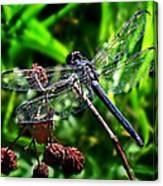 Slaty Skimmer Dragonfly Canvas Print