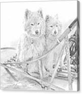 Sled Dogs Riding In Sled Pencil Portrait Canvas Print