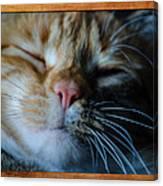 Sleeping Abby Framed Canvas Print